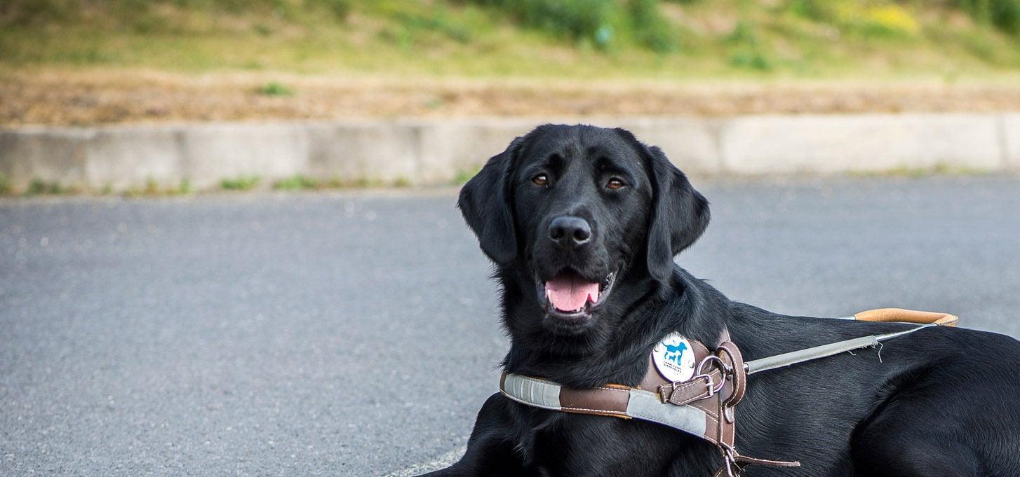 accessibilite-chien-guide-idf