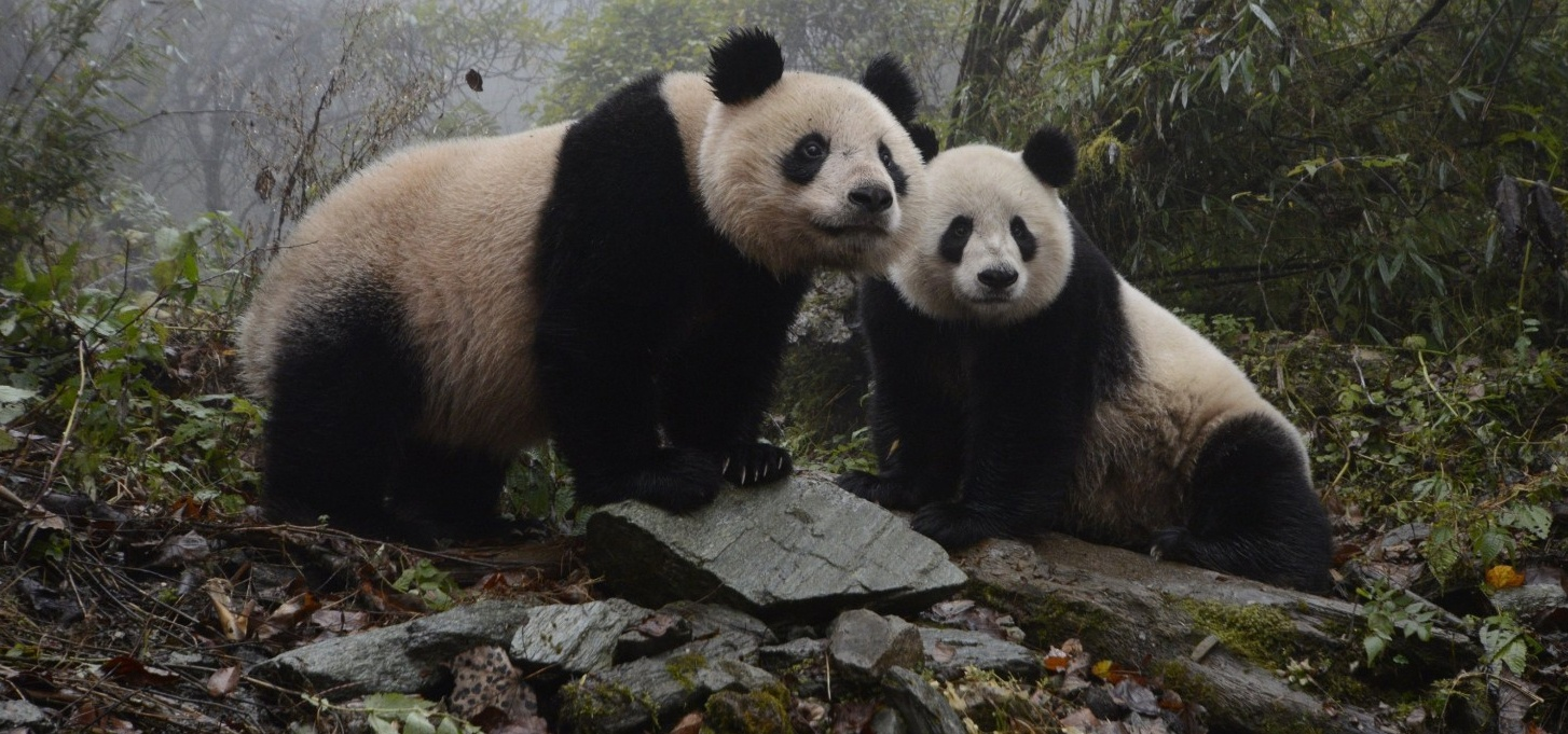 newsletter-mars-2018-panda