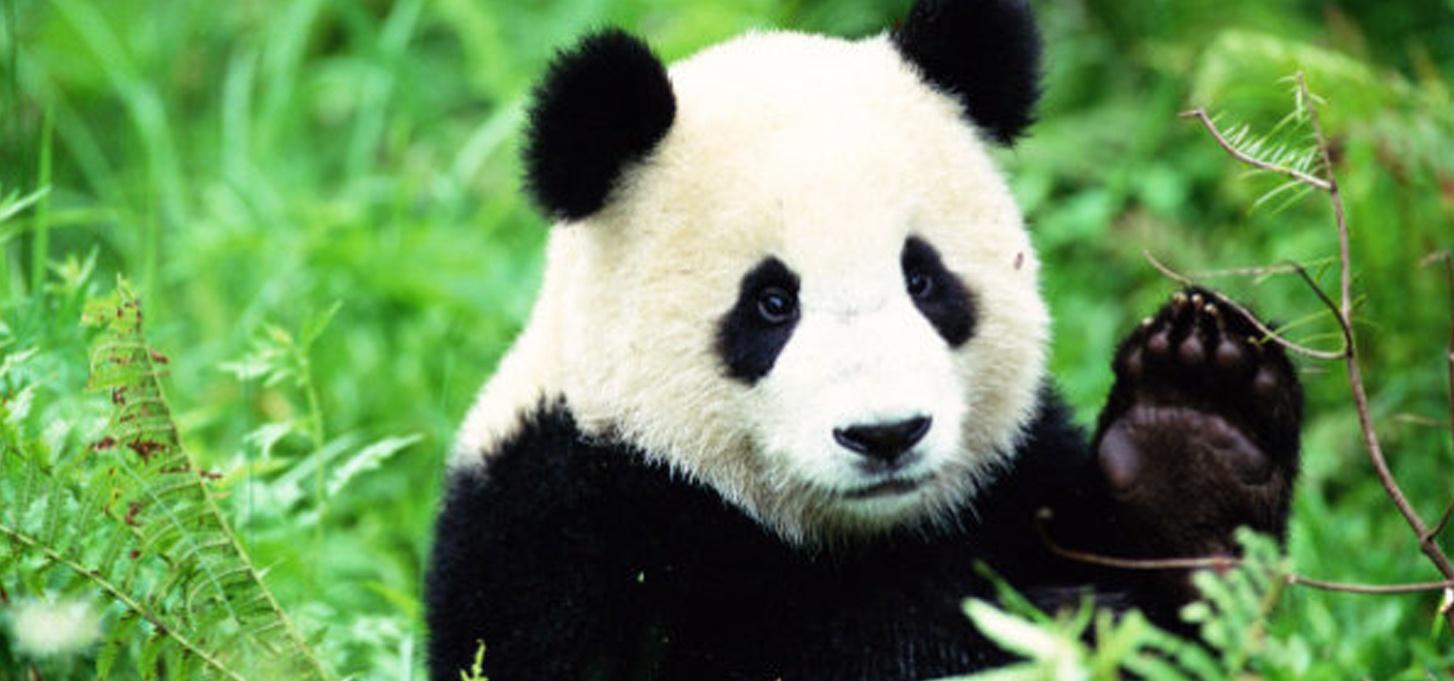 newsletter-novembre-2017-panda