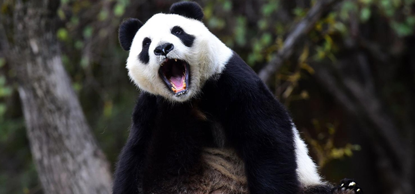 panda-newsletter-mai-2018
